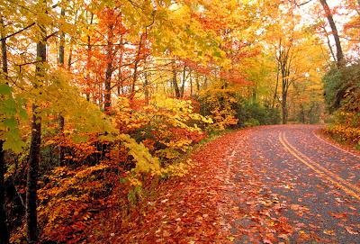 fall-road[1].jpg